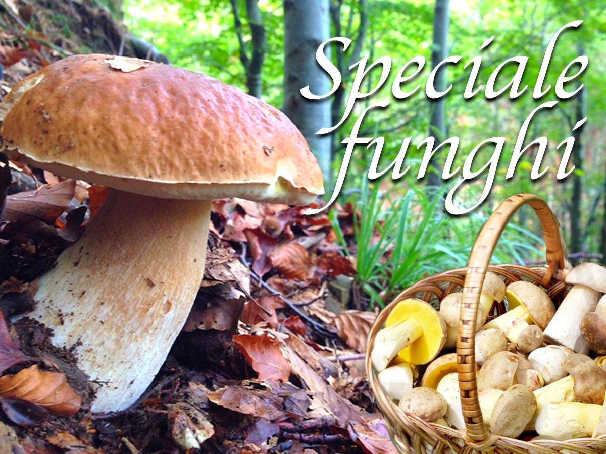 Speciale funghi di Alimentipedia