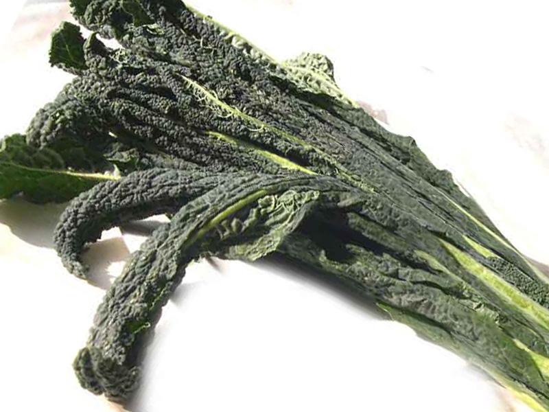 Cavolo nero o nero di toscana o cavolo a penna varietà di cavolo