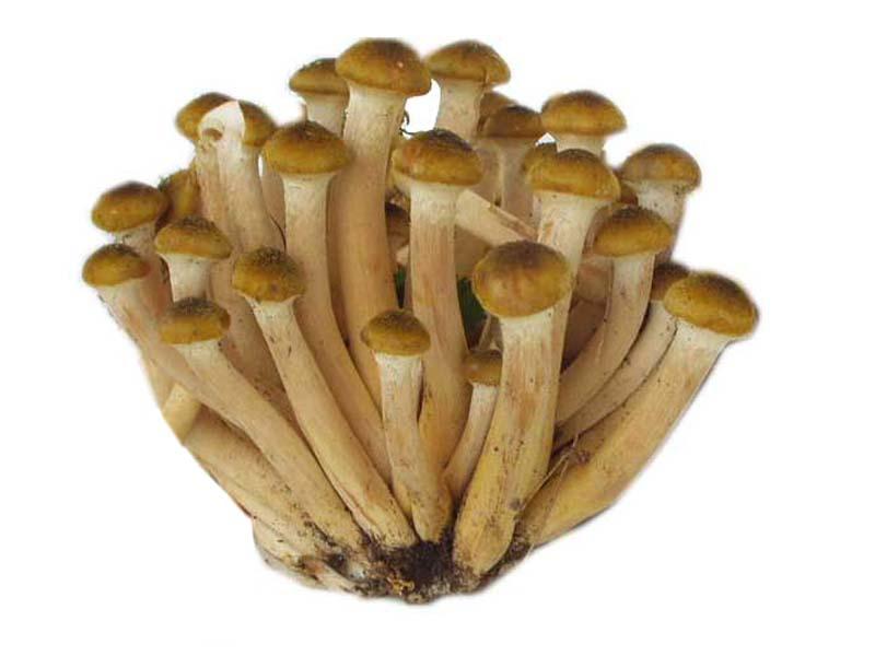 Non costoso significa da un fungo di unghie un mikospor il prezzo