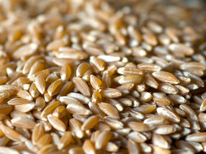 Farro - Cereale - Usi e consigli | Alimentipedia: enciclopedia ...