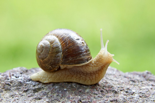 3quarksdaily: The Sex Life Of The Snail