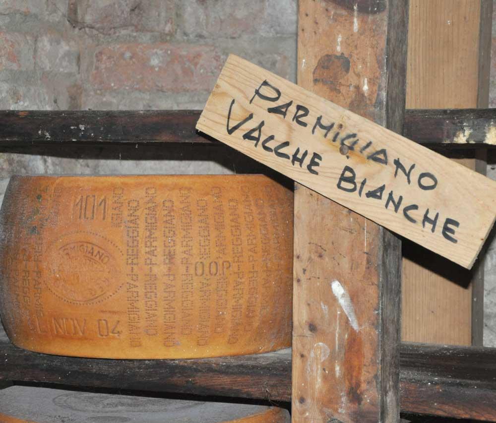 Parmigiano vacche bianche