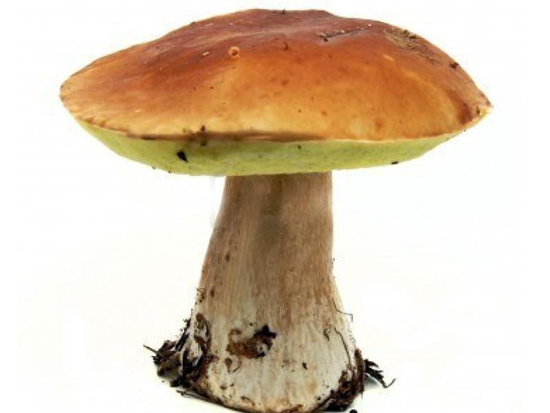 Tutte le unghie su una gamba con un fungo come conservarsi sono intaccate