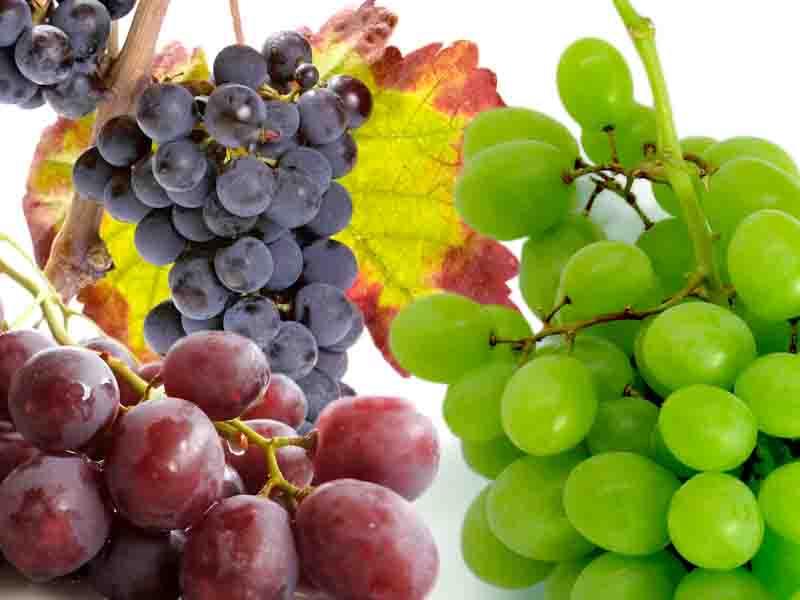 Uva descrizione del frutto della vite alimentipedia - Potatura vite uva da tavola ...