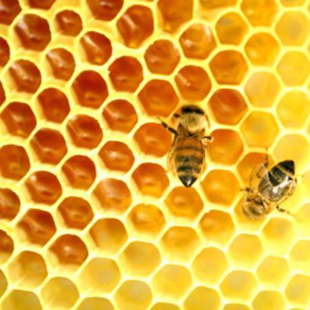 Le api come producono il miele?