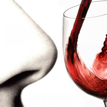 Degustazione vino. Esame olfattivo.