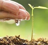 Usare acqua per annaffiare piante