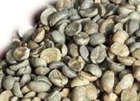 Chicchi di caffè non tostati