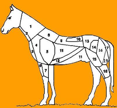 Tagli del cavallo