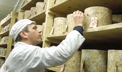 Lavorazione del formaggio Cheddar