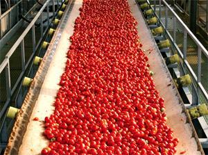 Pomodori per concentrato