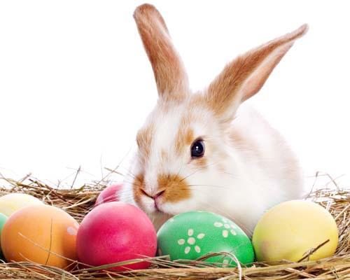 Coniglio simbolo di Pasqua