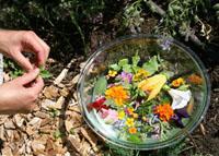 Come raccogliere le erbe