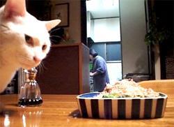 I gatti sono golosi di Katsoubushi