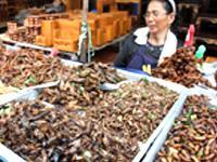 Vendita insetti al mercato in Asia