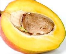Nocciolo del mango