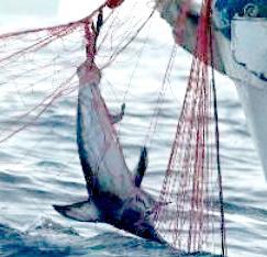 Pesca del pesce spada