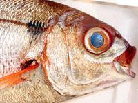 Testa del pesce pezzonia