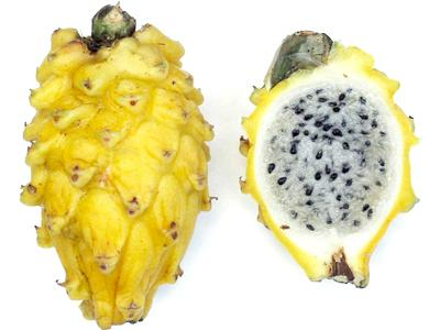 Pitaya varietà gialla