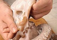 Pulizia della testa del polpo