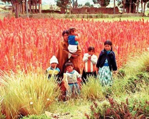 Piantagione di Quinoa sulle Ande
