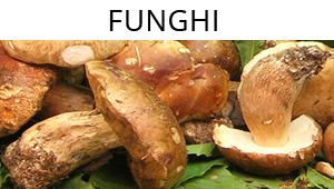 Speciale funghi