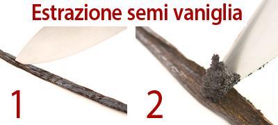 Estrazione semi di vaniglia
