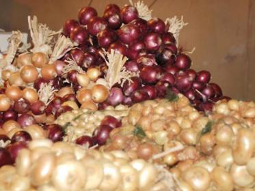Cipolle di Cannara