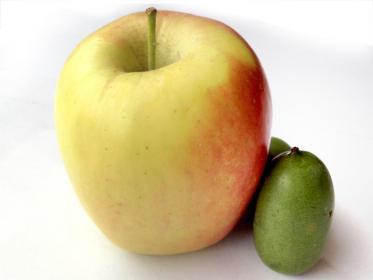 Dimensioni baby kiwi a confronto con una mela