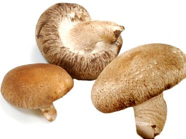 Funghi giapponesi Shiitake