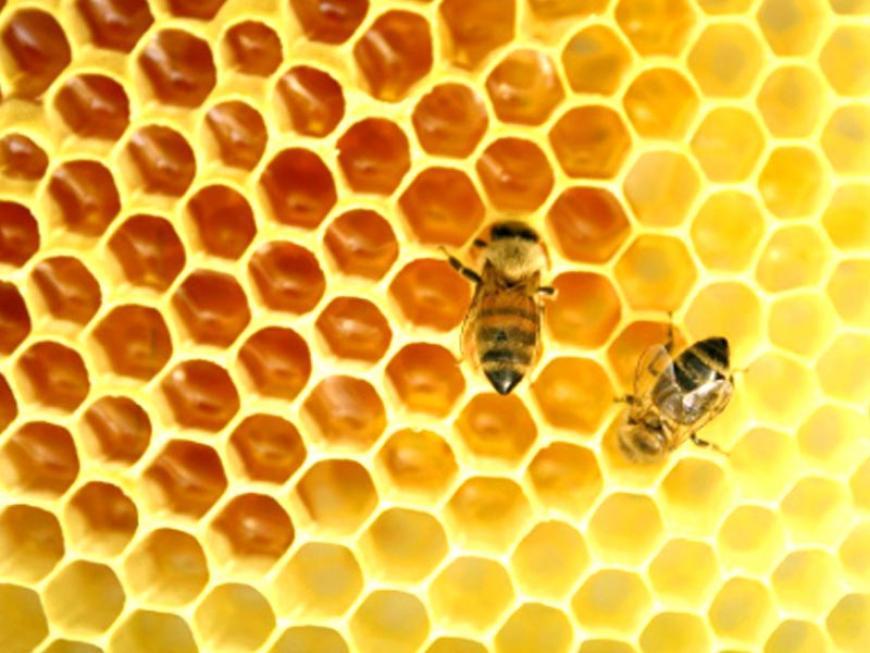 Alveare con api