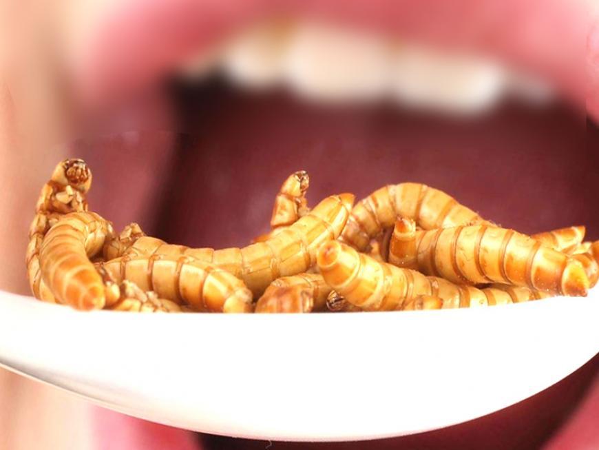 Conoscere gli insetti commestibili