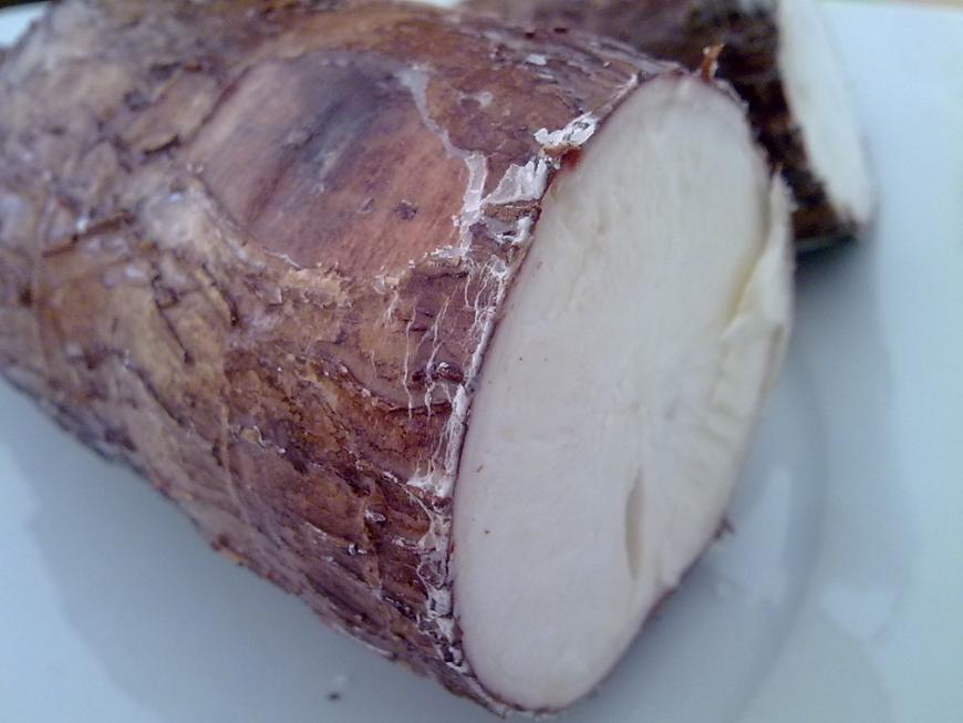 Manioca yucca casave
