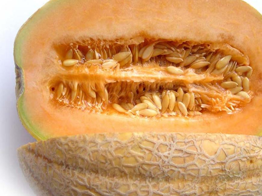 Melone di Mantova