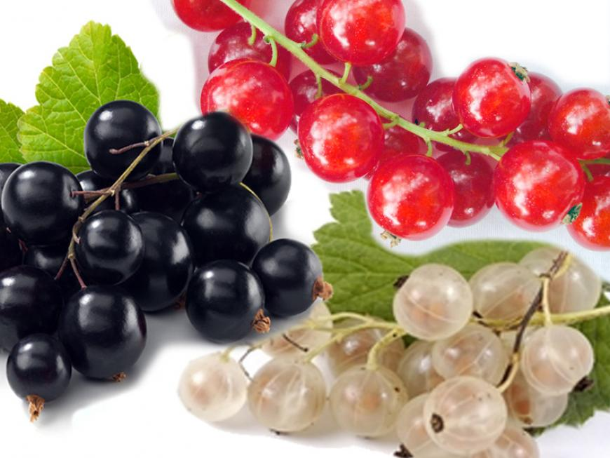 Ribes rosso, ribes nero e ribes bianco