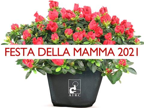 Azalea dell'AIRC anche online, un regalo ricco di significato per la Festa della mamma 2021