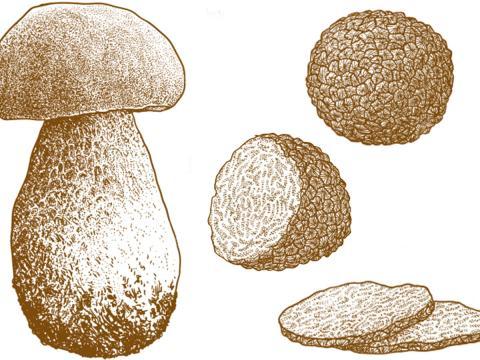 Funghi e tartufi: veri e propri